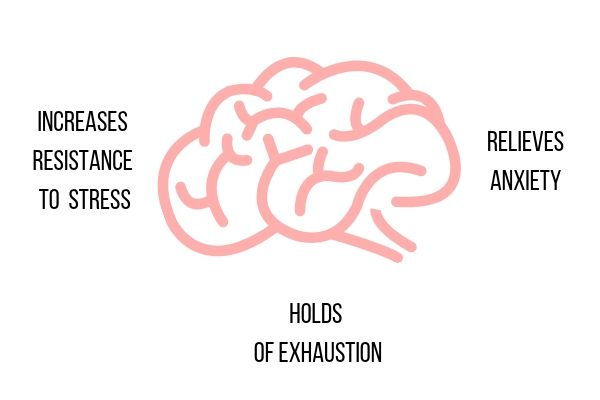a graphic demonstrating the effect of adaptogens on the brain and the stress response system