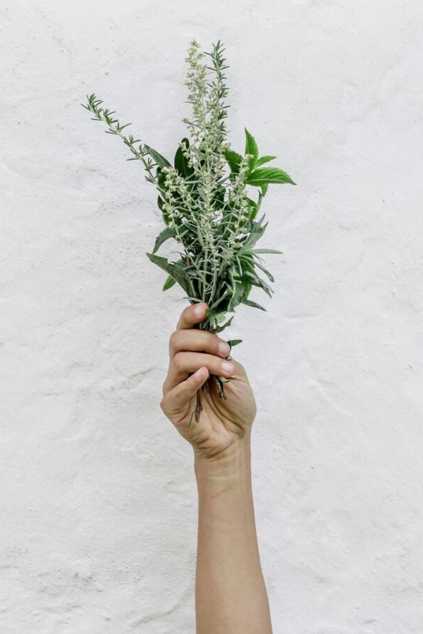 a hand holding a bunch of adaptogenic herbs against a white background