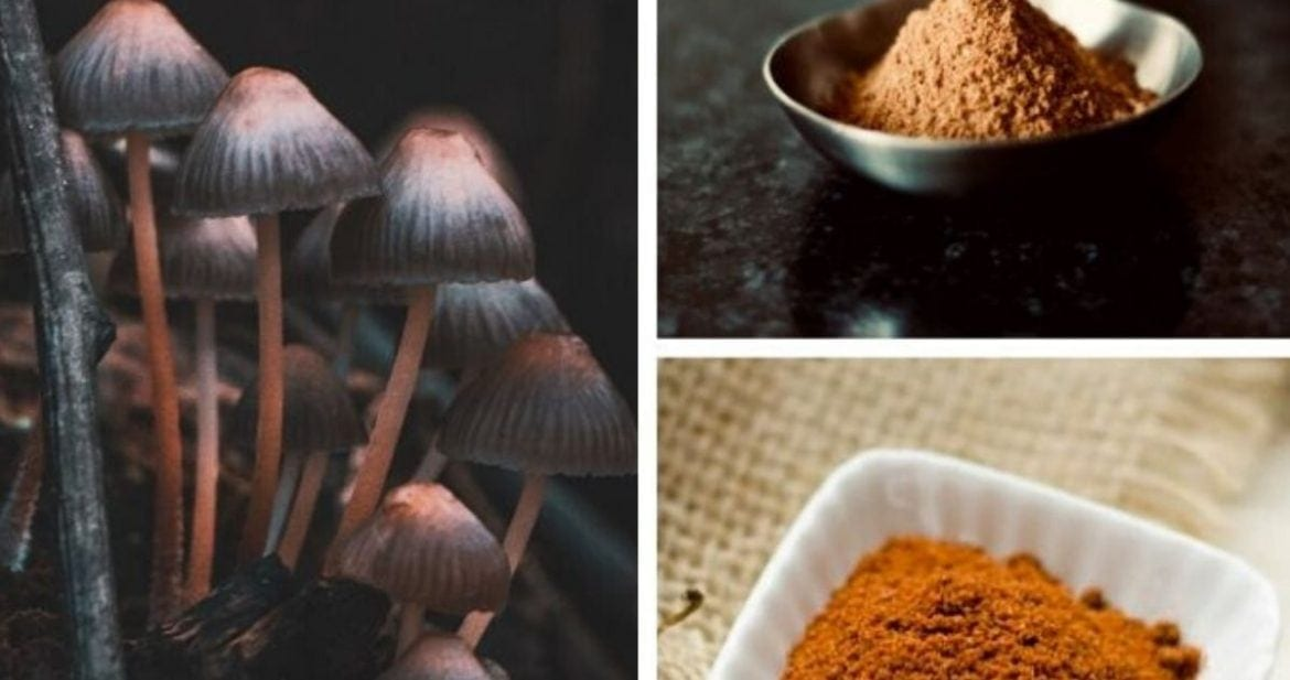 a collage of different medicinal mushrooms for anxiety