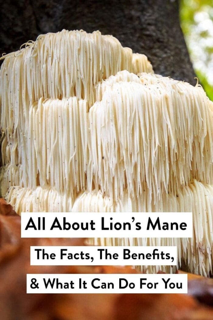 Lion's mane mushroom with a text overlay about lion's mane benefits